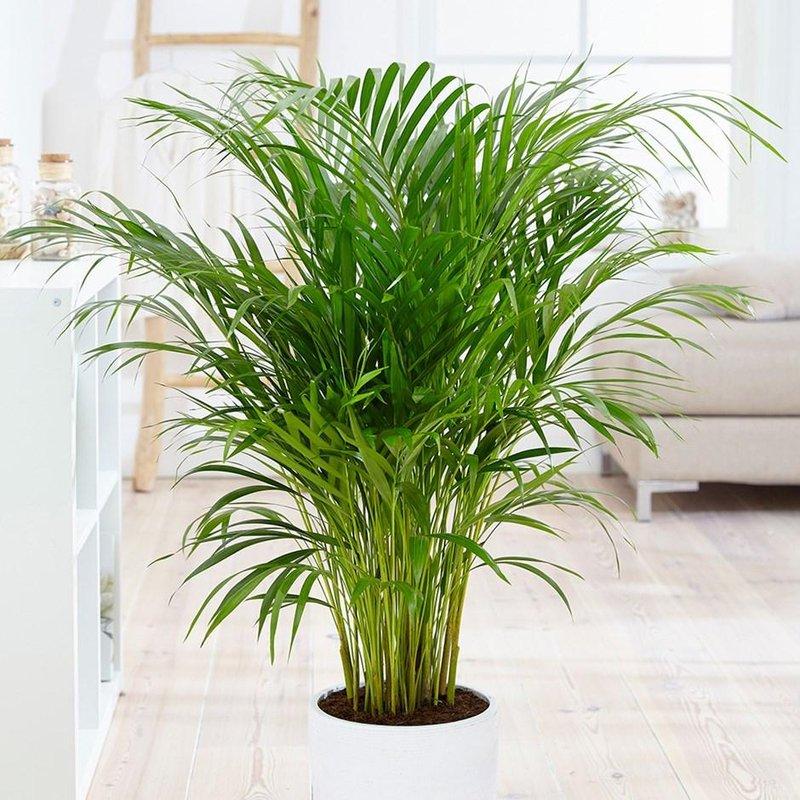 1 bamboo