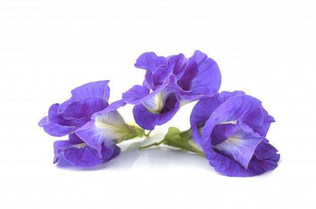11 Manfaat Bunga Telang -4.jpg