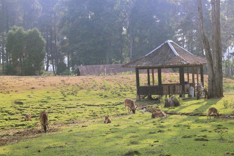 penangkaran rusa pengalengan