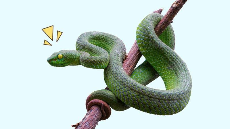 cara mengusir ular