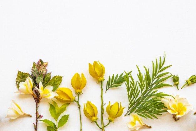 XX Manfaat Bunga Kenanga