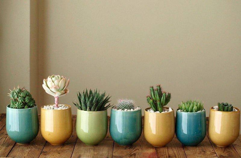 4 kaktus
