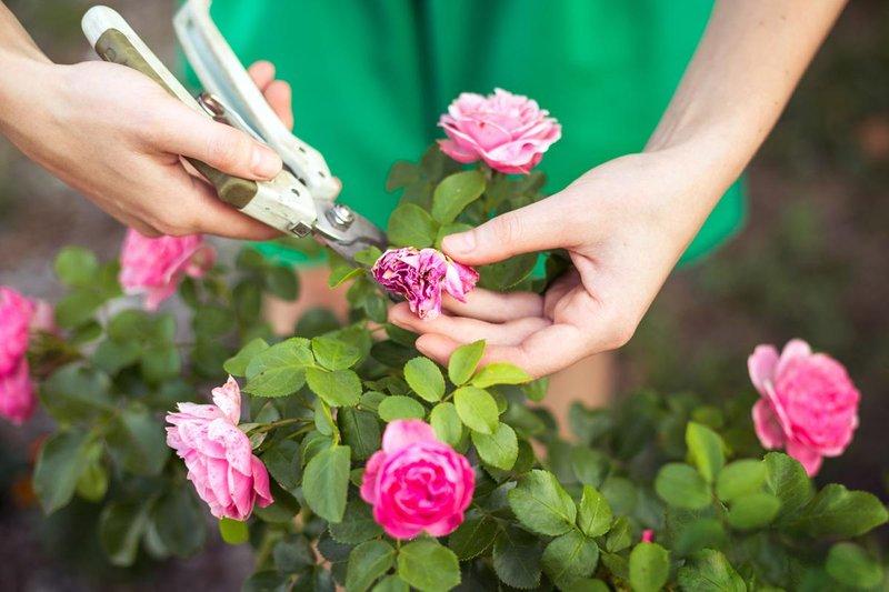 4 mawar