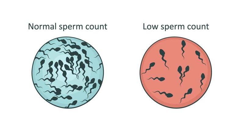 Jumlah sperma rendah.jpeg