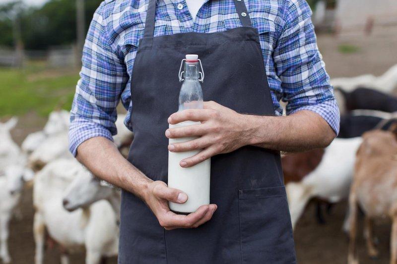 Susu kambing etawa dapat membantu melawan peradangan