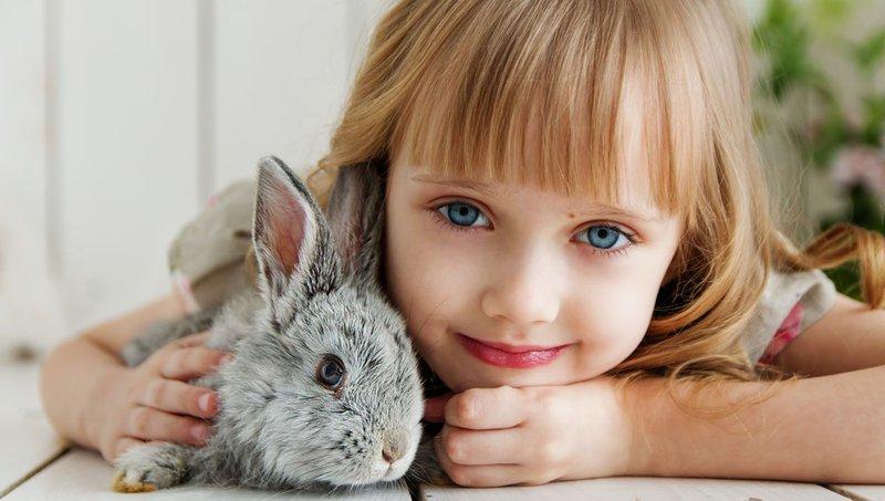 Kebaikan Memelihara Binatang Peliharaan