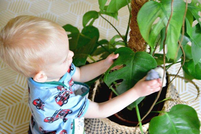 4 Trik Merawat Tanaman Indoor Saat Memiliki Bayi -4.jpg