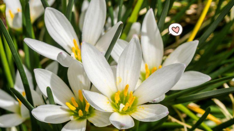 5 tanaman bunga untuk dekorasi di depan rumah, cantik! | orami