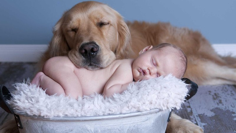 5 awesome ways to allow friendship grow between your human kids and their four legged furry siblings2