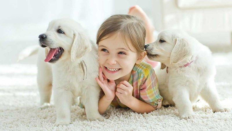 5 kiat ajarkan anak mengurus binatang peliharaan dengan baik 1