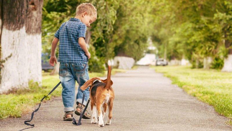 5 kiat ajarkan anak mengurus binatang peliharaan dengan baik 5
