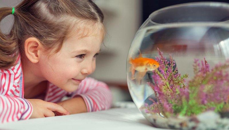 5 kiat ajarkan anak mengurus binatang peliharaan dengan baik 3