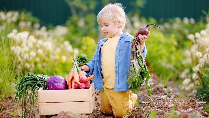 5 strategi jitu agar anak mau makan sayur 3