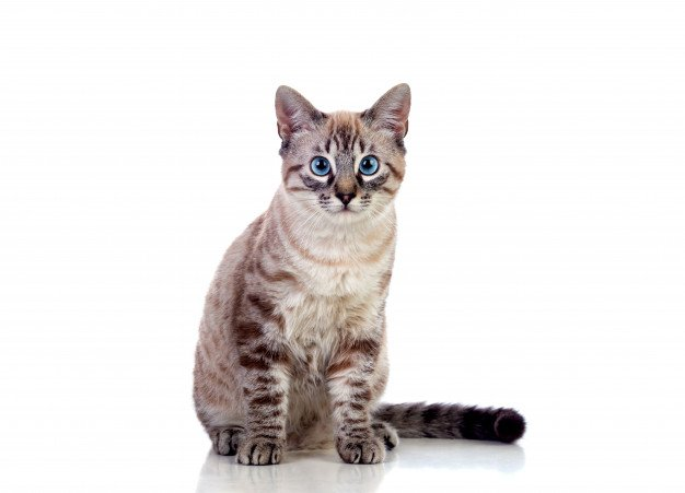 minyak ikan dapat meningkatkan fungsi kognitif pada kucing