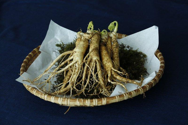 ginseng sudah lama dikenal sebagai viagra alami