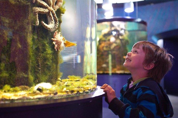 Akuarium Bisa Menghilangkan Stres - manfaat lain akuarium.jpg