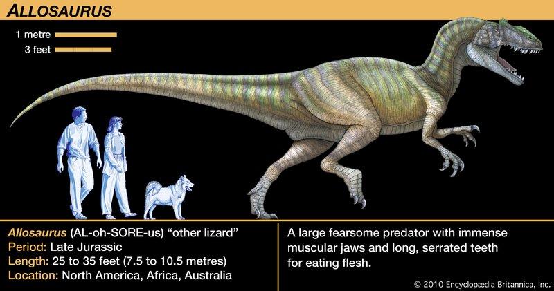 Allosaurus-jaws-Theropoda-flesh-teeth-meat-eating-dinosaurs.jpg