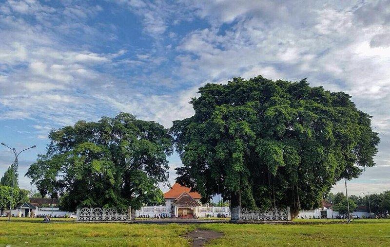 pohon beringin di alun alun yogyakarta