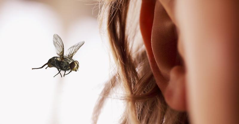 Mengeluarkan semut dari telinga.png