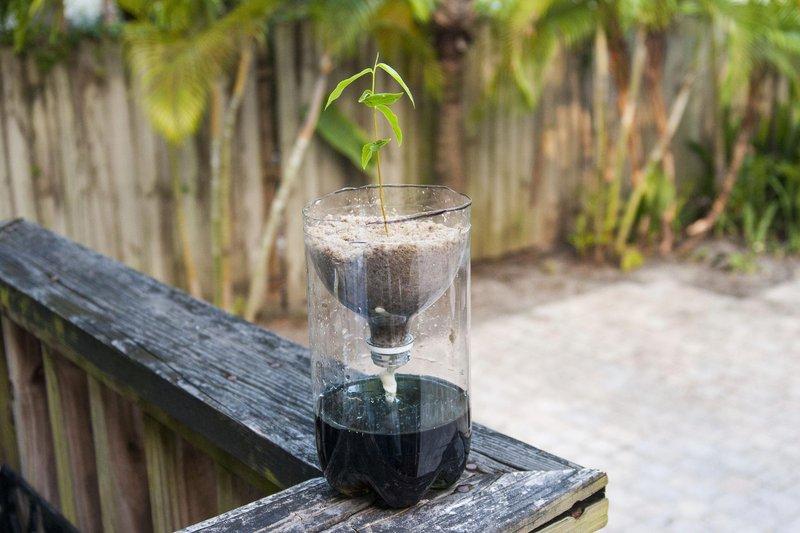 Begini Cara Menanam Hidroponik Dengan Botol Bekas