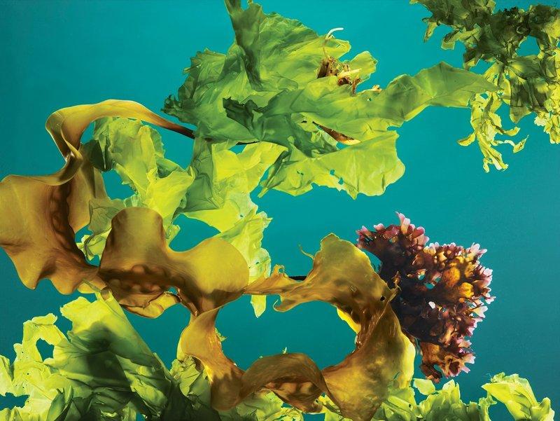 Bolehkah Bayi 6-12 Bulan Makan Rumput Laut? 1