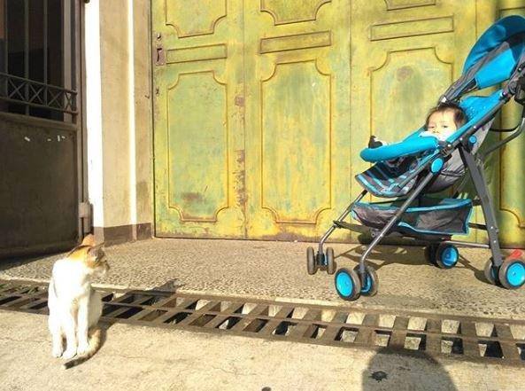 Bram saat usianya belum genap 6 bulan, berjemur di atas preloved stroller bersama kucing..JPG