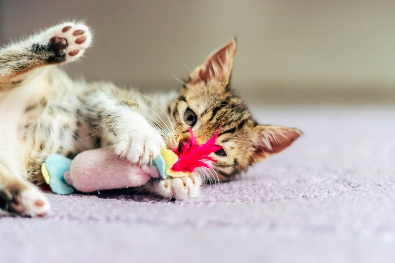 Cara Agar Kucing Cepat Gemuk Secara Alami.jpeg