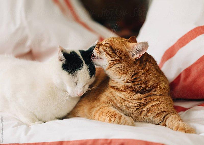 Cara agar Kucing  Nurut dan Tidak Galak.jpg