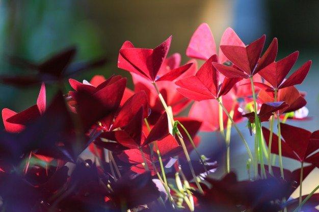 Cara Merawat Bunga Kupu Kupu.jpg
