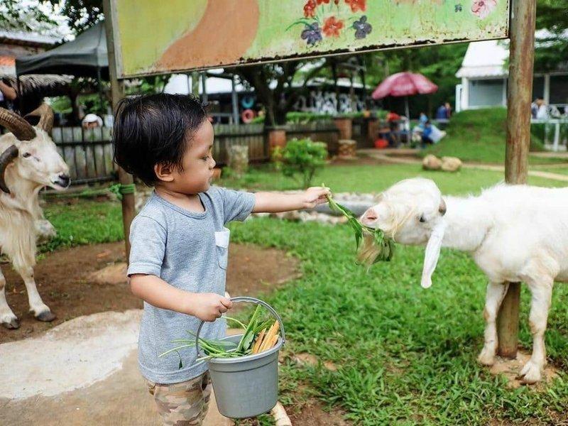 D-Kandang-Farm-Depok.jpg