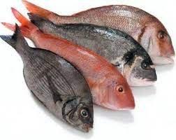 Dinding Perut Ikan Elastis.jpg