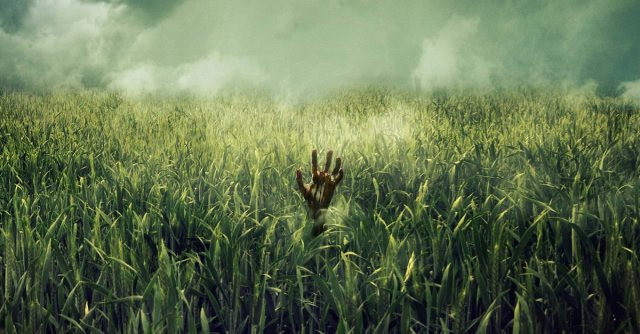 Film Horor In The Tall Grass.jpg