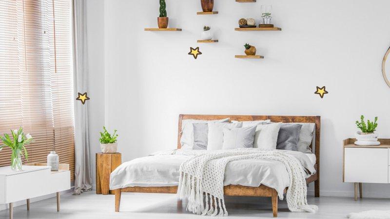 tanaman hiasan kamar yang unik dan hits