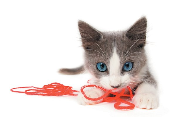 Gray-and-white-kitten-with-string.jpg