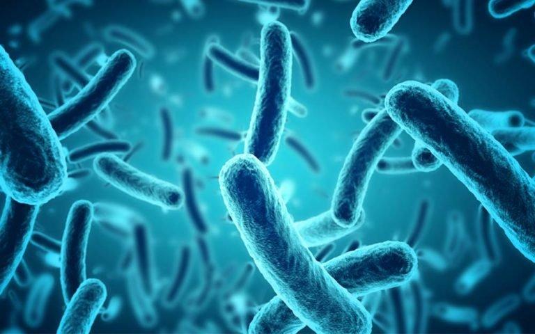 Hubungan antara Infeksi Darah dan Kanker Kolorektal - Kanker kolorektal dan infeksi bakteri.jpg