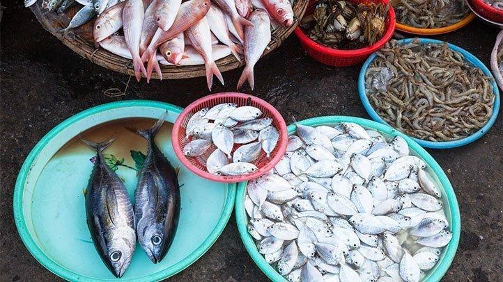 Ikan Segar, Bagaimana Ciri-cirinya.jpg