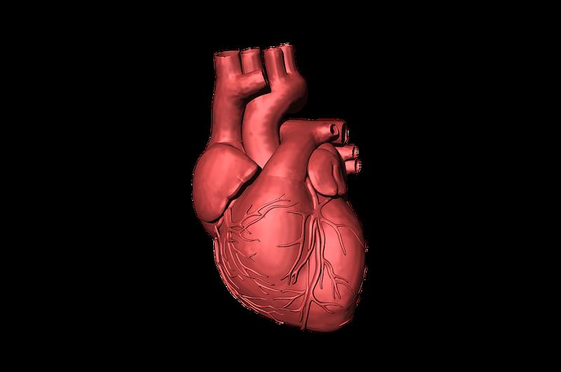 Kardiomiopati hipertrofi - gejala (Pixabay).png