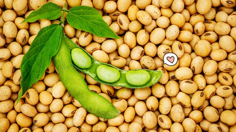 Namun Konsumsi Kacang Kedelai Berlebih juga Penuh Berisiko