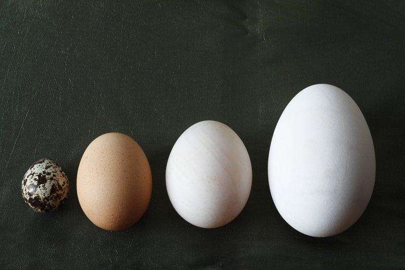 Kunci Sukses Bikin Cake, Ini Ukuran Telur untuk Kue yang Benar 02.jpg