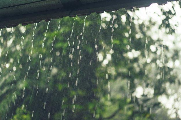 Manfaat Hujan Bagi Tumbuhan