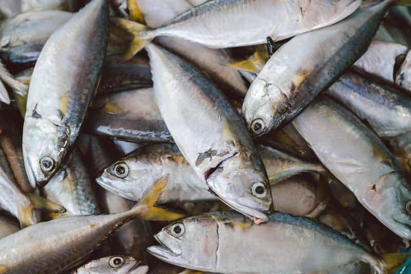 Manfaat Ikan Tongkol untuk Kesehatan