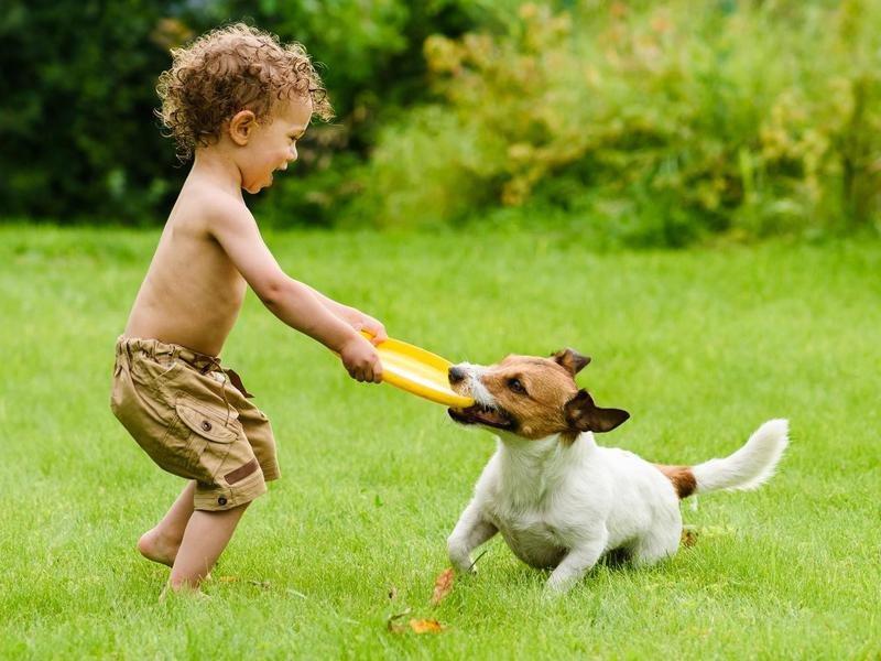 5 Manfaat Memelihara Hewan Untuk Psikologis Anak Berbagi Tips