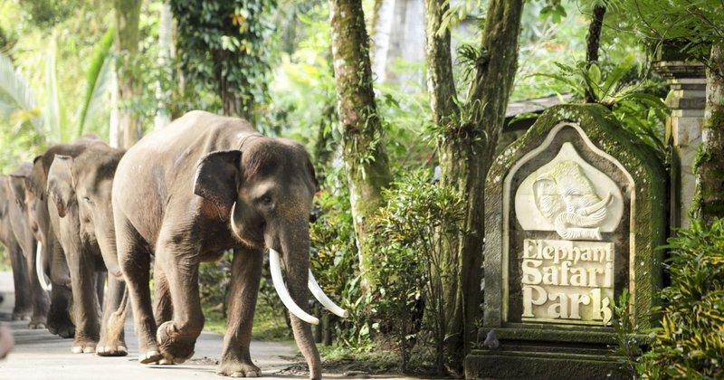 Mason Elephant Safari Park & Lodge.jpg