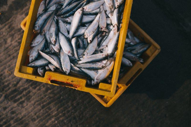 Mengapa Ikan Jadi Makanan Terpenting Saat Hamil, Ini Ulasannya - Cover.jpg