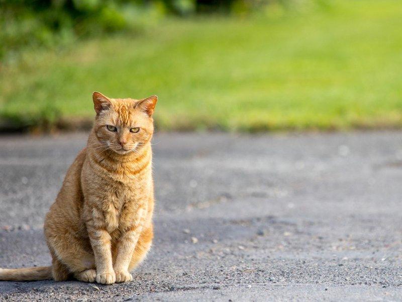 Mitos Nabrak Kucing