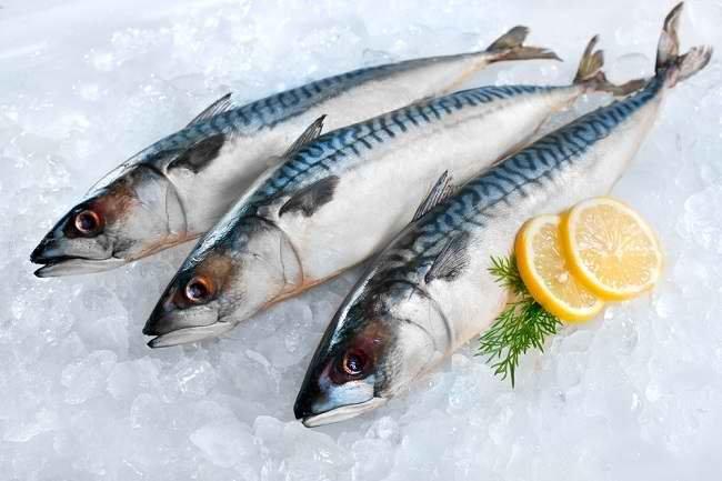 Penyimpanan dan Keamanan Ikan Laut