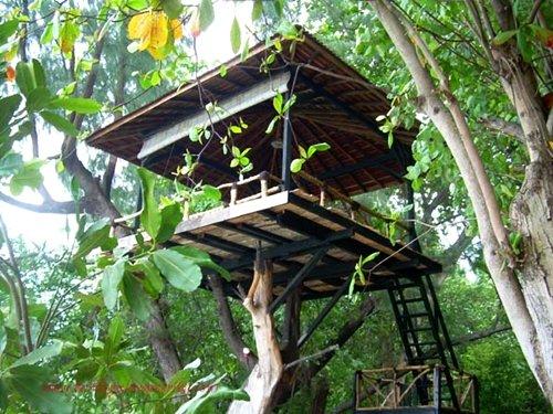 Rumah Pohon Sederhana