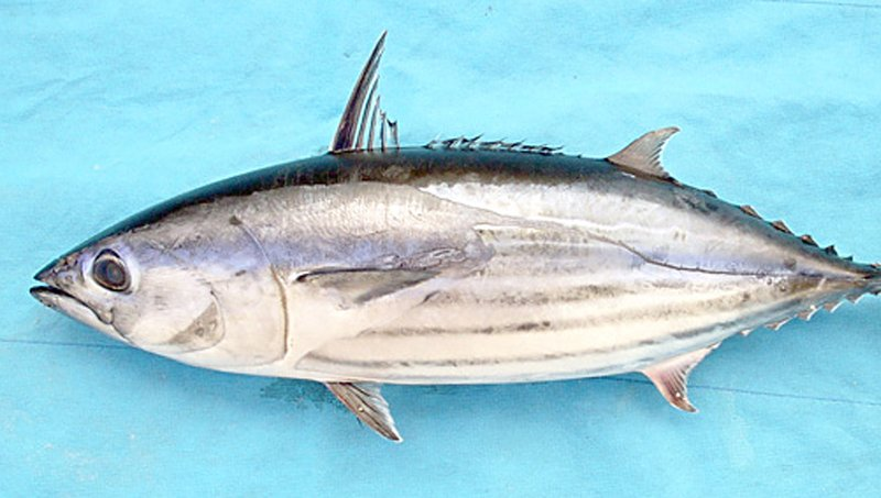 Selain Salmon, Ini 4 Jenis Ikan Untuk Meningkatkan Kecerdasan Anak 4.jpeg