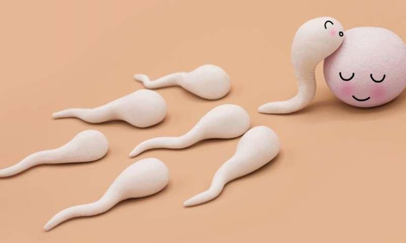 Sperma abnormal, apa maksudnya (3).jpg