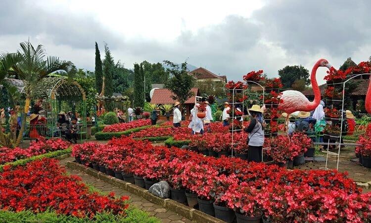 Taman-Bunga-Begonia-750x450.jpg